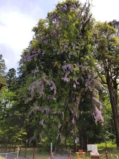 伊佐須美神社の自然