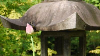 勝林寺の自然