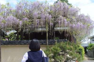 當麻寺の自然
