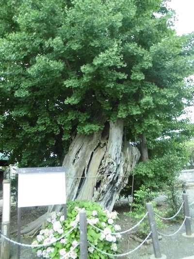 八幡宮の自然