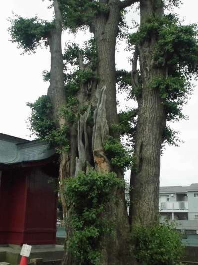 熊野神社の自然