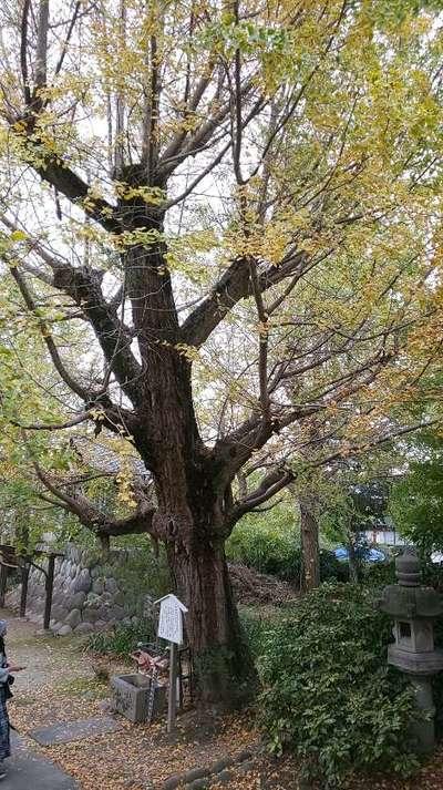 愛知県祐専寺の写真