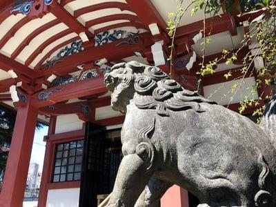 筑土八幡神社の狛犬