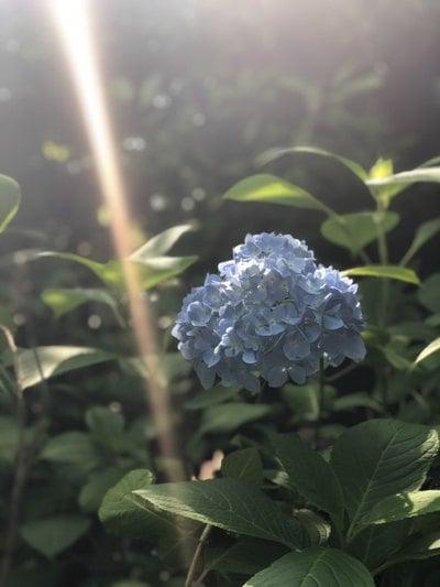資福禅寺の自然