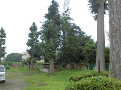 神奈川県三島神社の自然