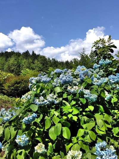 岐阜県千光寺の自然
