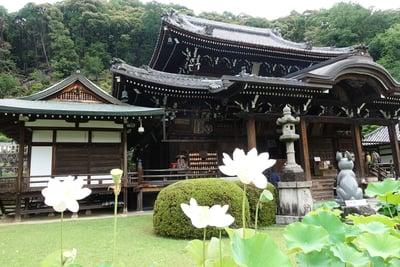 三室戸寺の本殿