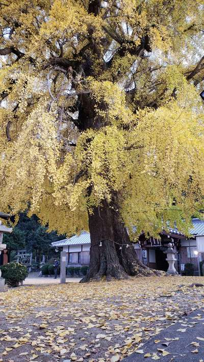 丹生酒殿神社(和歌山県)