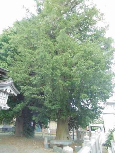 岡崎神社の自然