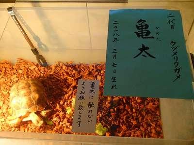 香取神社の動物