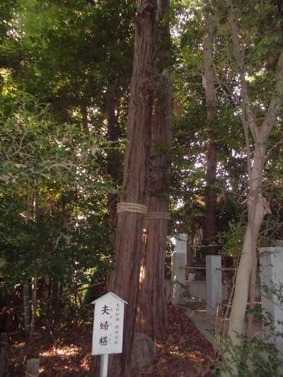 座間神社の自然