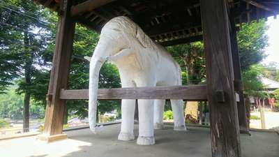 観音寺の狛犬