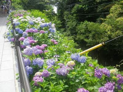 成就院(神奈川県)