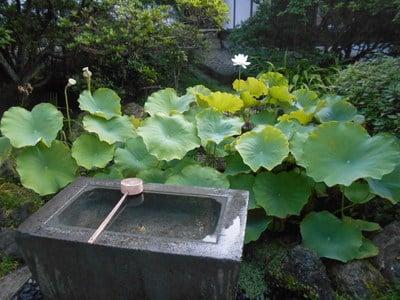 安養院田代寺(神奈川県)