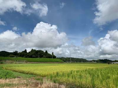 瀧口神社(千葉県)