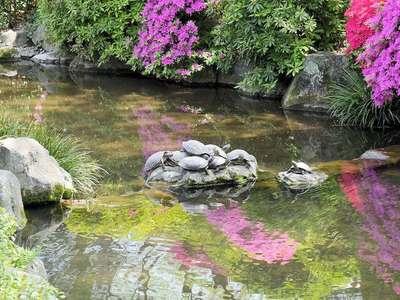 根津神社の動物