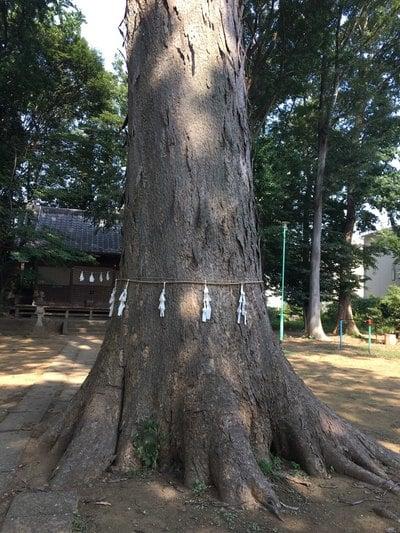 八王子神社の自然