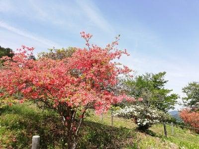 宝登山神社の自然