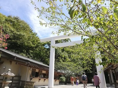 安房神社の鳥居
