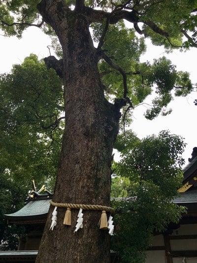 梶無神社の自然