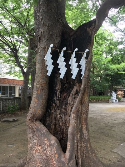 杉山神社の自然