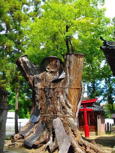 幣川神社の自然