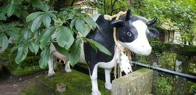 高住神社の狛犬