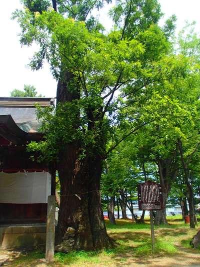 川中島古戦場八幡社の自然