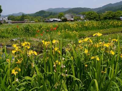 常泉寺(埼玉県)