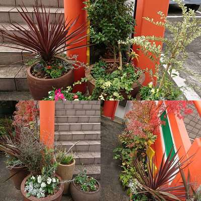 教西寺の庭園
