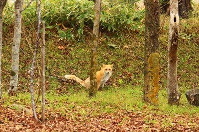 釧路一之宮 厳島神社の動物