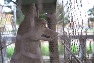 千種稲荷神社の狛犬