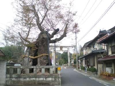 中山神社の建物その他