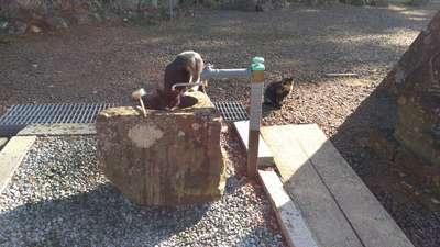 熊野那智神社の手水