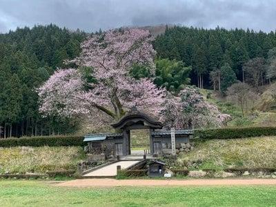 朝倉神社の自然