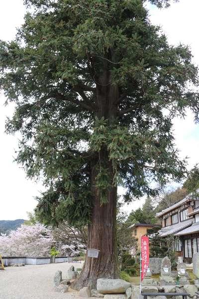 常福寺(三重県)