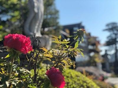 法源寺の自然