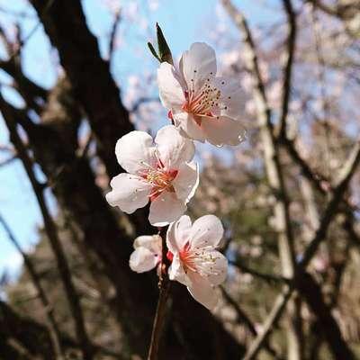 壽徳寺 じゅとくじの自然