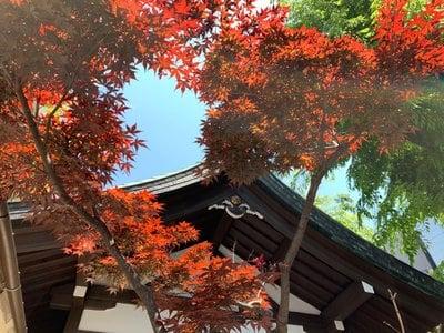 恵比寿神社の自然