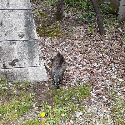 導きの社 熊野町熊野神社の動物
