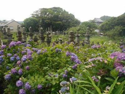 光明寺のお墓