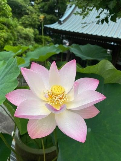 最明寺(神奈川県)