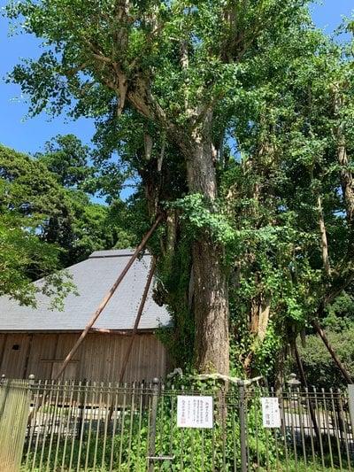 村山浅間神社の自然
