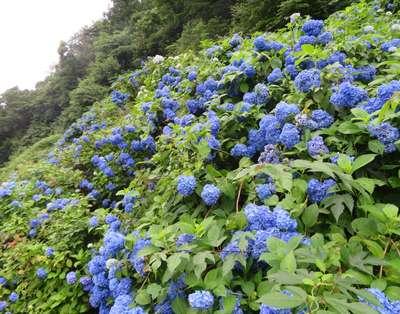 済渡寺の自然