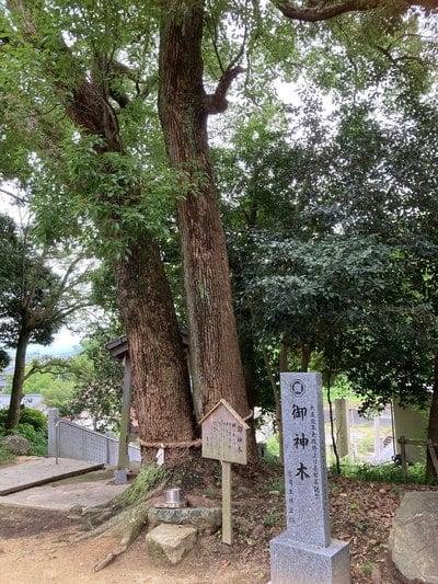 飯岡神社の自然
