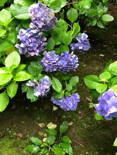 杉本寺の自然