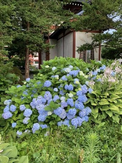 眞久寺の自然