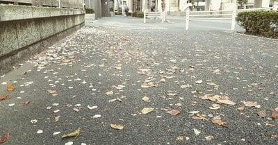 導きの社 熊野町熊野神社の庭園