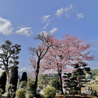 光明寺の景色