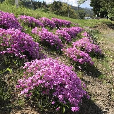 高司神社〜むすびの神の鎮まる社〜の自然